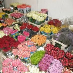 В цветочном магазине нашли 55 кг наркотиков