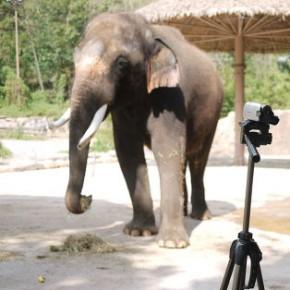 В южнокорейском зоопарке появился говорящий слон