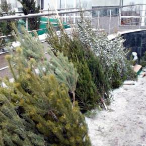 Петербургские елочные базары начнут работать с 20 декабря
