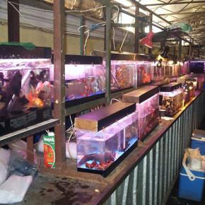 При пожаре на Кондратьевском птичьем рынке погибли животные