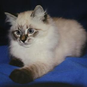 Медведев подарит финскому экс-президенту кошку