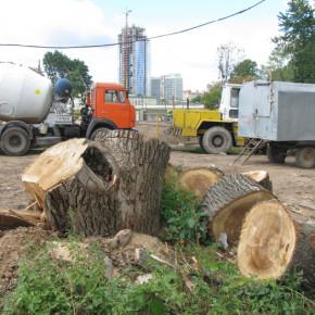 Смольный поднимет штраф за незаконную вырубку деревьев до 1 миллиона