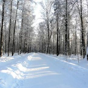 В Приморском районе Петербурга появились аллеи Садырина и Морозова