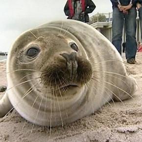 Двух мертвых тюленей нашли на берегу Финского залива за выходные