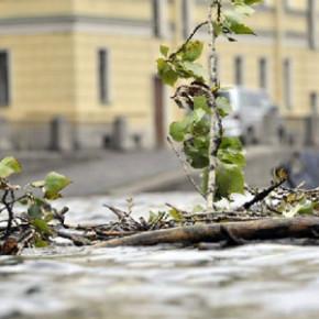 Из-за сильного ветра в Петербурге упали два дерева: на детскую больницу и Кондратьевский проспект