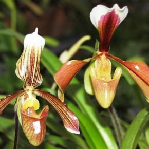 5-я выставка орхидей в Ботаническом саду проработает до 1 декабря 2013