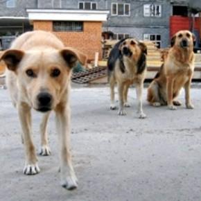 Отлов бродячих собак и кошек в Санкт-Петербурге поручат частникам