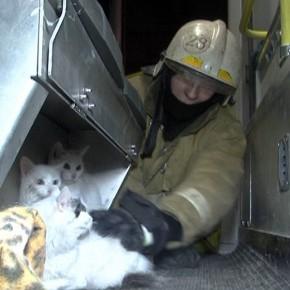 В Петербурге из горящей квартиры пожарные спасли 11 кошек
