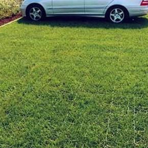 Парковку на газонах - разрешить? Отмена штрафов в Петербурге