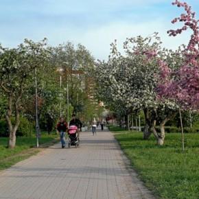 Определены самые благоустроенные районы Петербурга
