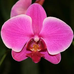 Выставка орхидей открылась в ботаническом саду Петербурга