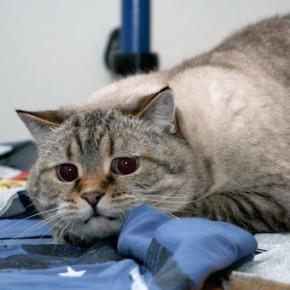 Наказание для купчинца, убившего кота Жорика, выберут через суд
