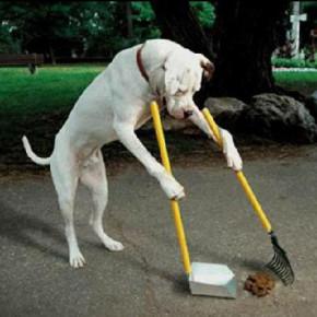 Петербургский закон о содержании собак откорректировали, но штрафы пока прежние