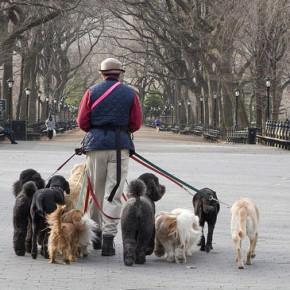 Налог на собак в России может стать реальностью