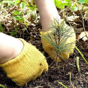 Во всероссийский День посадки леса озеленят окрестности Луги