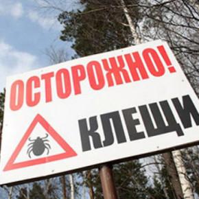 В Петербурге и области начался сезон пиковой активности клещей
