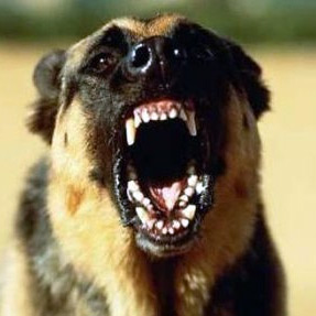 В поселке имени Морозова собака искусала 4-летнего ребенка