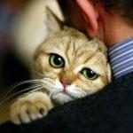 Убийцу кота Жорика приговорили к 10 месяцам ограничения свободы