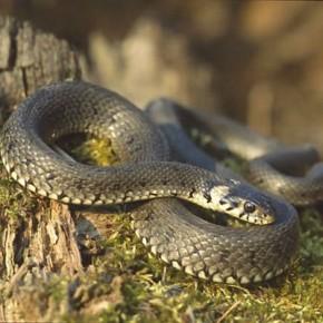 C начала года в Ленинградской области от укусов змей пострадали 6 человек