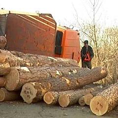 В ДТП на Таллинском шоссе перевернулся лесовоз, погиб 1 человек