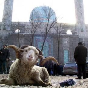 Курбан-байрам-2013 мусульманский Петербург отметит 15 октября