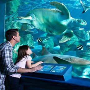 Новый океанариум в Купчино потеснит Парк Интернационалистов