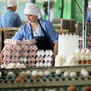 Почему в Петербурге яйца подорожали на 20% за месяц, разберется ФАС
