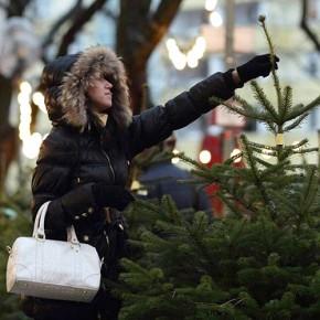 Елочные базары в Петербурге начнут работать с 20 декабря