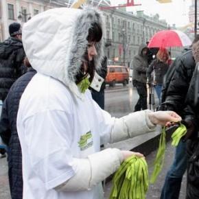 2 миллиона блокадных ленточек раздадут в Петербурге 20-27 января