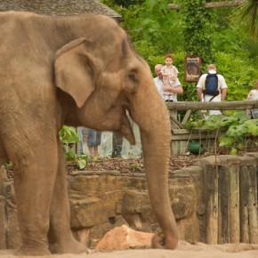 Под строительство зоопарка рассмотрят Ржевку, Юкки и Курортный район