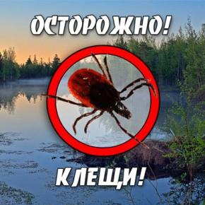 Сезон клещей-2014 в Петербурге и области в самом разгаре
